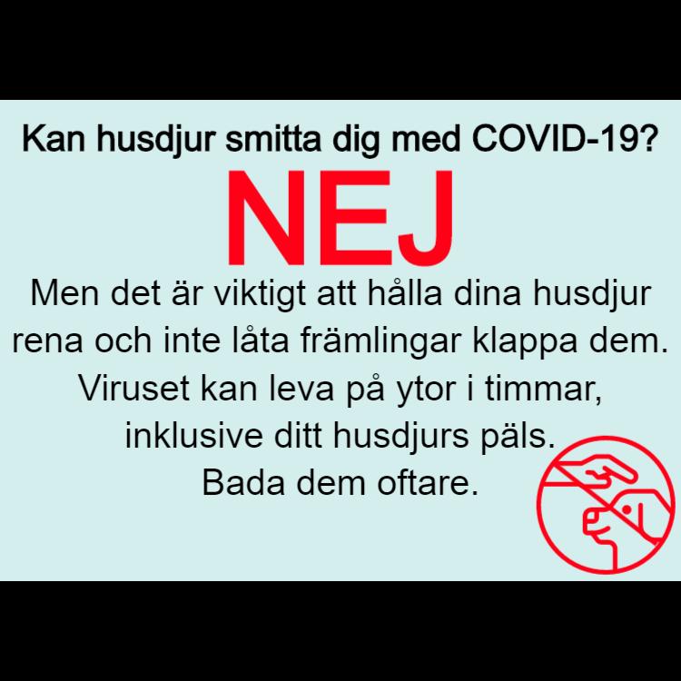 Kan husdjur smitta dig med COVID-19? - klistermärke 1