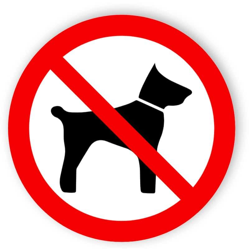 Inga djur förbjudna